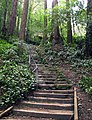 Dipsea Trail, the higest portion of the lowest stairway is old rock. Watch your footing - panoramio.jpg