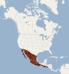 Distribution of Choeronycteris mexicana.png