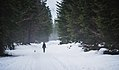 Dog and female hiker in the winter forest.jpg