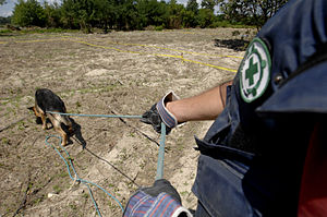 Mine action - Dog search for mines in Bosnia and Herzegovina