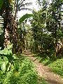 Dolores,Quezonjf9780 09.JPG