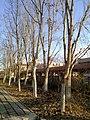 Dongying, Shandong, China - panoramio (390).jpg
