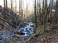 Double Culvert Branch in Chattahoochee NF - panoramio.jpg
