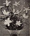 Dreer's bulbs plants, shrubs and seeds for fall planting - autumn 1937 (1937) (21000738452).jpg