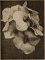 Dreer's wholesale price list - Henry A. Dreer. (21061155025).jpg