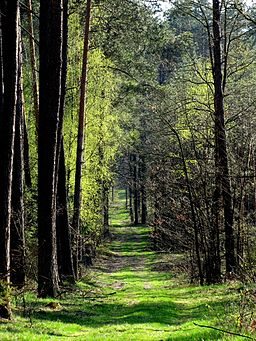 Droga przez Lasy Kozłowieckie