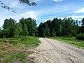 Droga przez las - panoramio.jpg