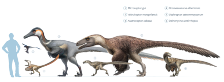 velociraptor wikiwand