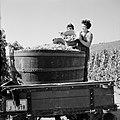 Druivenpluksters legen hun emmers in de kuip, Bestanddeelnr 254-4176.jpg