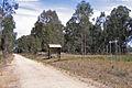 EG Rail Trail looking south at Bumberrah, 18.10.2008.jpg