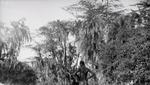 ETH-BIB-Knabe in der Serengeti-Kilimanjaroflug 1929-30-LBS MH02-07-0512.tif