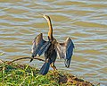 ET Bahir Dar asv2018-02 img08 Blue Nile at the bridge.jpg