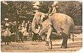 ElephantJoyRide.jpg