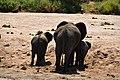 Elephants, Tarangire National Park (4) (28671304086).jpg