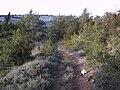 Entre Mont-ral i la Mussara 174-7403 IMG.jpg
