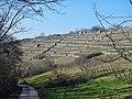 Enztalradweg mit Blick auf die Weinberge in Besigheim - panoramio.jpg