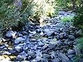 Estero en el Valle de las Catas 4.jpg