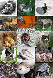 Komunikasi hewan - Wikipedia bahasa Indonesia, ensiklopedia