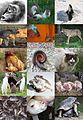 Ethology diversity.jpg