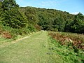 Exmoor , Grass Path at Tarr Steps Woods - geograph.org.uk - 1507843.jpg