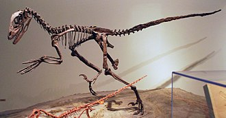 Deinonychus - Mounted skeleton cast, Field Museum