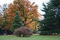 Fall Foliage in Laurel Mountains - panoramio (8).jpg