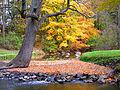 Fall tree (4132358836).jpg