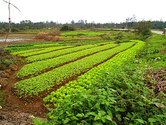 Anthropization - An example of land that has been appropriated for cultivation in Hainan, China.