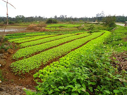 China has the largest agricultural output of any country. Farm in Hainan 01.jpg