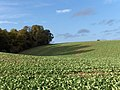 Farmland between Lambourn and Baydon - geograph.org.uk - 253250.jpg
