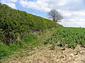 Field boundary - geograph.org.uk - 405234.jpg