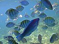 Fish Frenzy (5365820502).jpg