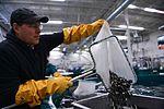 Fish Stock 160509-F-LQ965-251.jpg