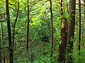 Flickr - Nicholas T - Henry's Woods (Revisited) (2).jpg