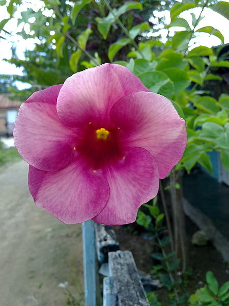 Archivo:Flora de barrio Jardines del Este.jpg