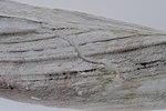 FloreAntarctique (2).jpg