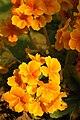Flore de Bercy 8.JPG