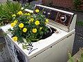 Flower Machine... (45367335).jpg