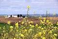 Flower power (2456506115).jpg