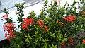 FlowersAt lawn.jpg