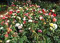 Flowers (187).jpg