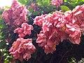 Flowers flower.jpg
