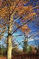 Foliage Walk (3) (30053222930).jpg