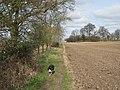 Footpath between two huge ploughed field - geograph.org.uk - 1243215.jpg