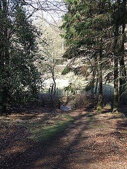 Footpath in woods near Apsley Heath and Woburn - geograph.org.uk - 367489