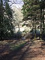 Footpath in woods near Apsley Heath and Woburn - geograph.org.uk - 367489.jpg