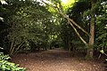 Footpath through the woods on Jarn Heath - geograph.org.uk - 1372800.jpg