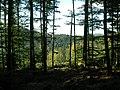 Forêt au col du Donon (Grandfontaine) (2).jpg