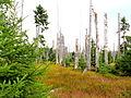 Forêt insecte Šumava.JPG