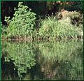 Ford Park, Shoreline Reflection, Redlands, CA 7-12 (7740799898).jpg